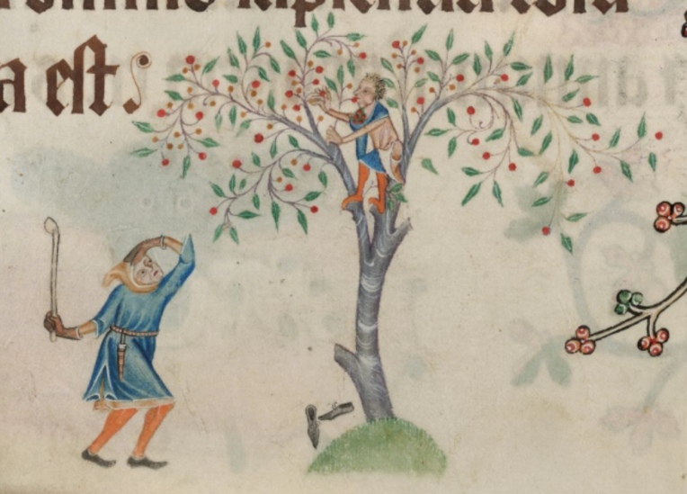 A medieval drawing of a boy in a cherry tree eating/stealing the cherries. Under the tree is a man with a club.
